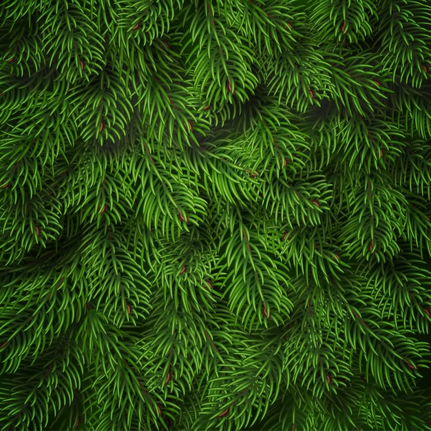 Realistic christmas tree branches background Premium Vector