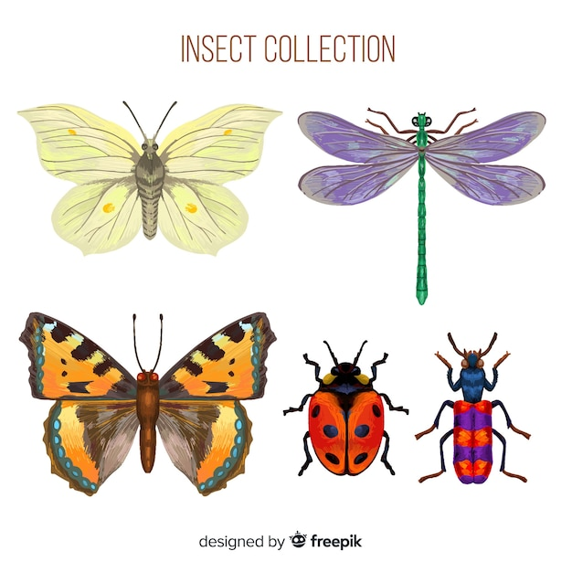 Realistic colorful bug collection Free Vector