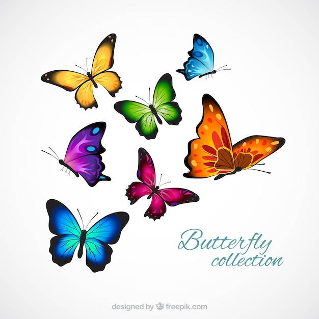 Realistic and colorful butterflies Free Vector