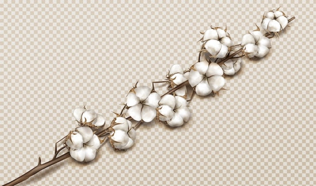Realistic cotton branch with flowers and stem Free Vector