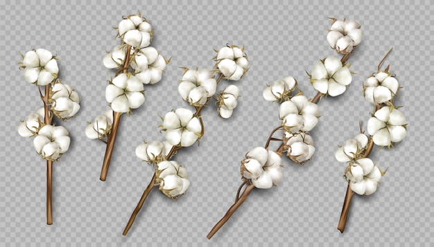 Realistic cotton branches with flowers and stems Free Vector