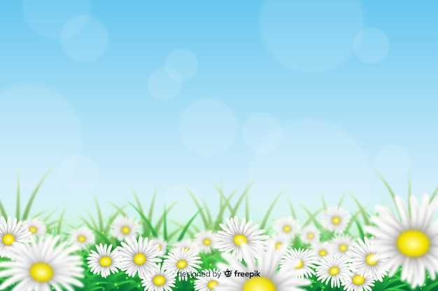 Realistic daisy flowers background Free Vector