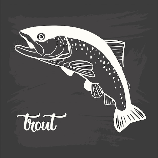 Realistic drawing on a blackboard of the trout Premium Vector