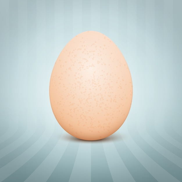 Realistic egg Free Vector