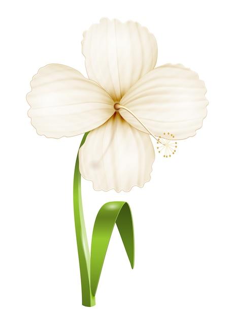分離されたリアルな花 無料ベクター