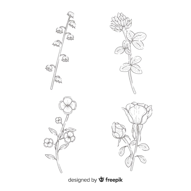 Realistic flowers collection drawing Free Vector