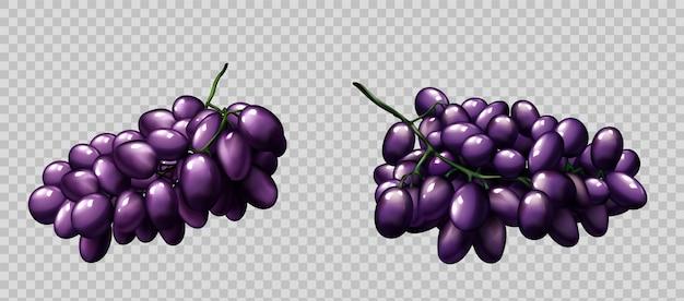 現実的なブドウ房熟した紫色の果実セット 無料ベクター