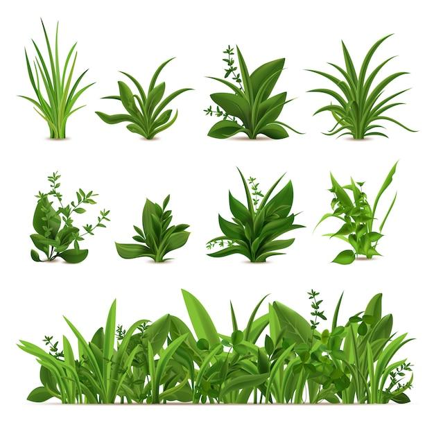 Реалистичные кусты травы. зеленые свежие растения, сад сезонные весенние и летние зелень и травы, ботанический росток набор. натуральный газон, луговые кусты, растительный бордюр Premium векторы