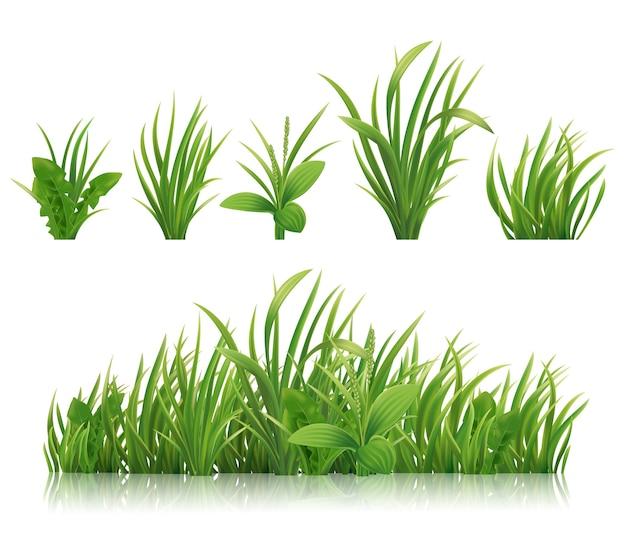 リアルな緑の草春のハーブと茂み Premiumベクター