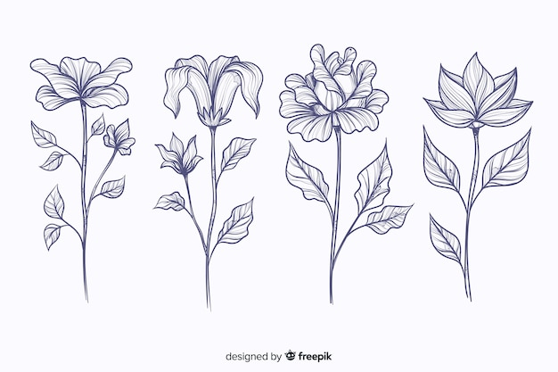 Realistic hand drawn botanical flowers collection Free Vector