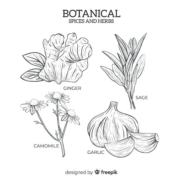 현실적인 손으로 그린 식물 향신료와 허브 프리미엄 벡터