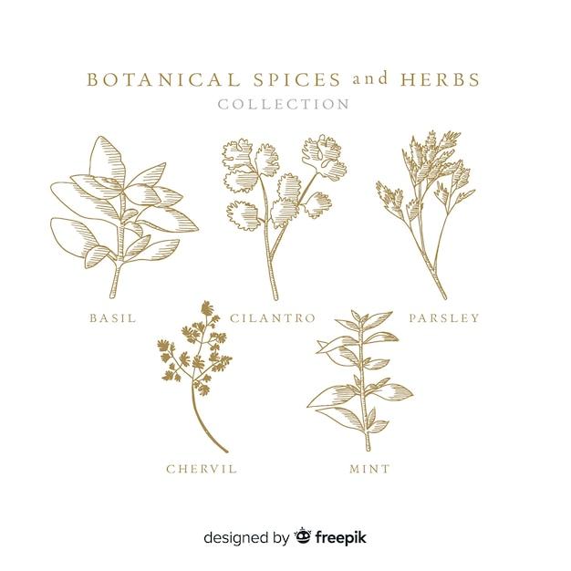 リアルな手描きの植物性スパイスとハーブ Premiumベクター