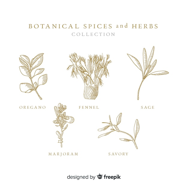 リアルな手描きの植物性スパイスとハーブ 無料ベクター