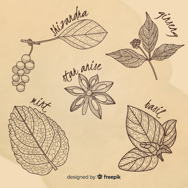 Realistic hand drawn botanical spices and herbs Free Vector