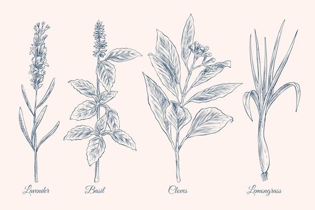 Collezione di erbe di olio essenziale disegnata a mano realistica Vettore gratuito