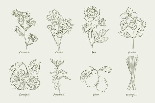 リアルな手描きのエッセンシャルオイルハーブコレクション 無料ベクター