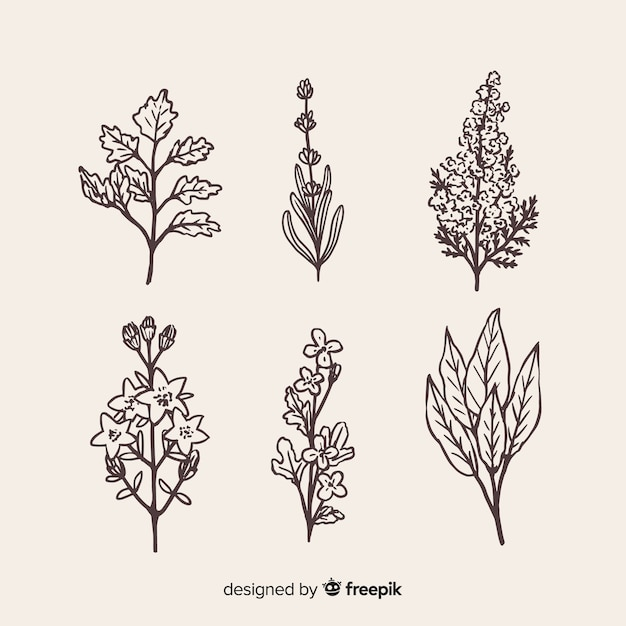 Realistic hand drawn flowers collection Free Vector