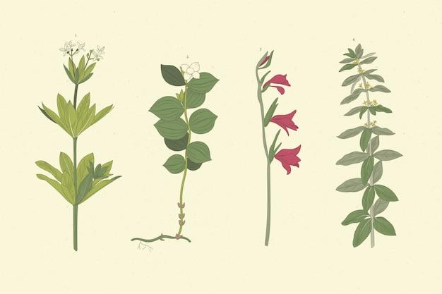 Realistiche erbe disegnate a mano e fiori selvatici Vettore gratuito