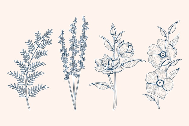 Realistic hand drawn herbs & wild flowers Free Vector