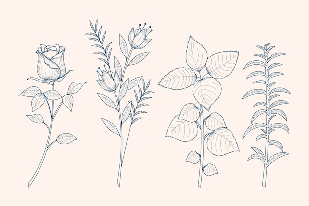 Realistic hand-drawn herbs & wild flowers Free Vector