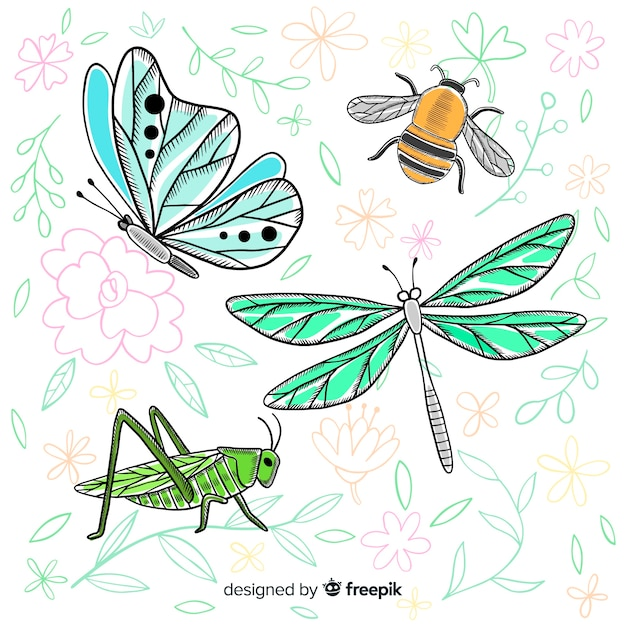 Realistic hand drawn insect collection Free Vector