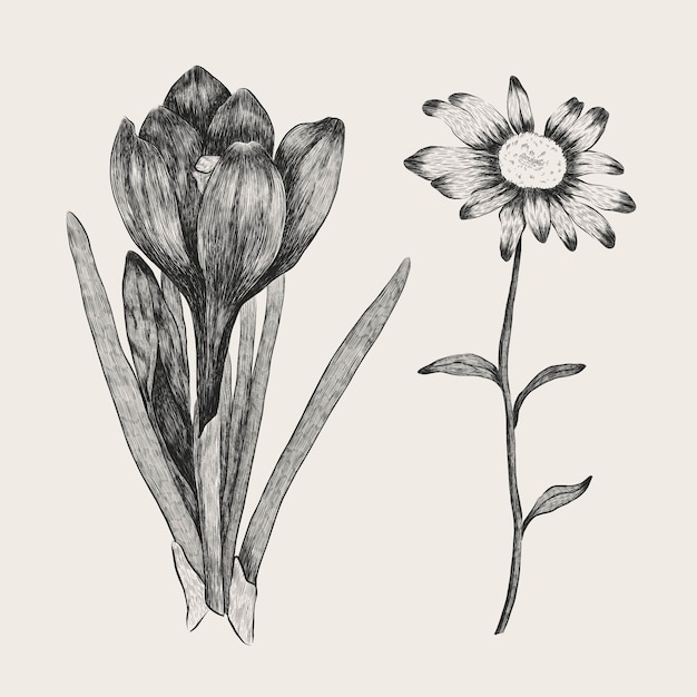 Realistic hand drawn vintage botany flower collection Free Vector