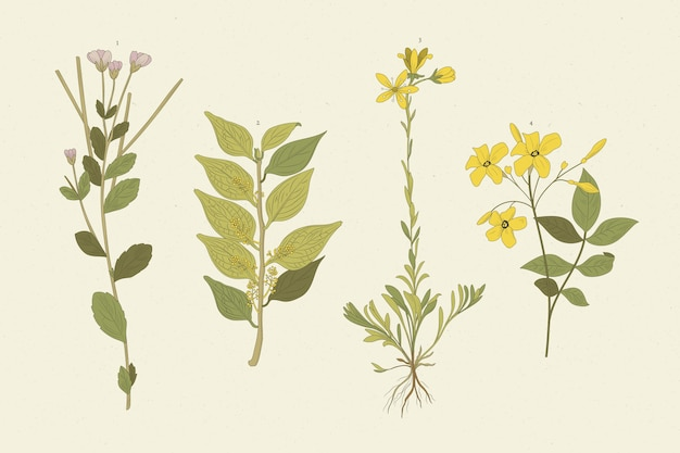 Реалистичные травы и полевые цветы Premium векторы