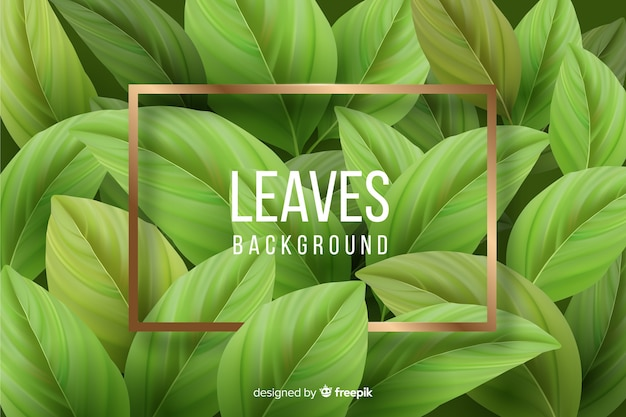 Realistic leaves with golden frame background Free Vector