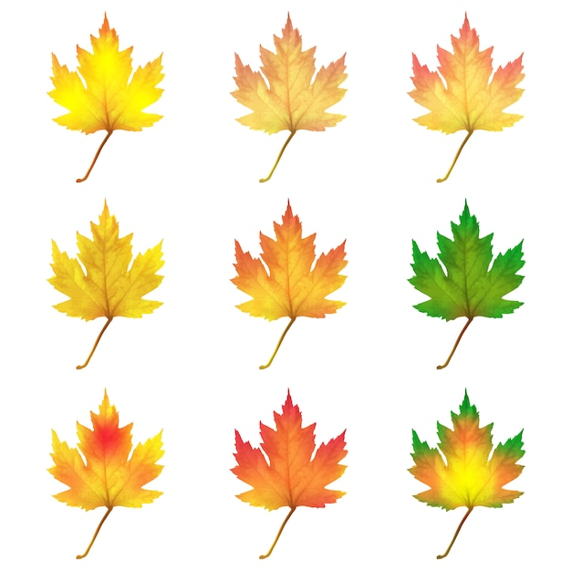 Realistic maple leaves isolated on white background Premium Vector