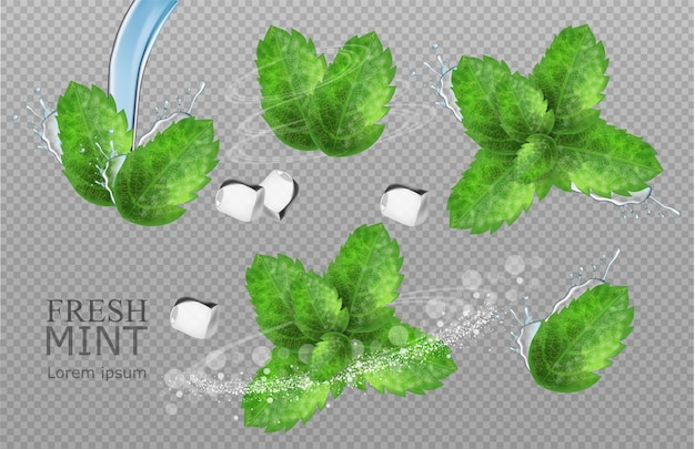Realistic mint leaves Premium Vector