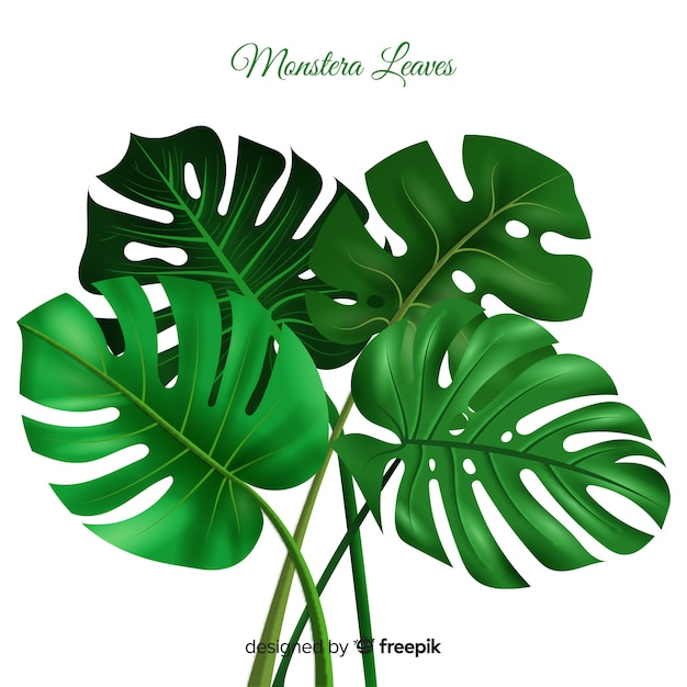 Realistic monstera background Premium Vector