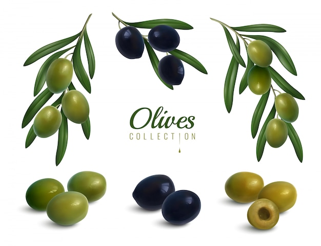 Realistic olives branches set Free Vector