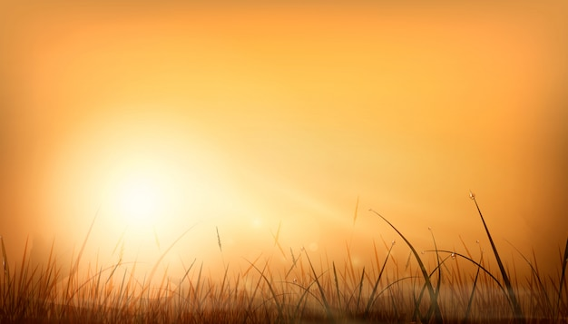 Realistic orange dawn rays of the sun and glare of a natural background over a field of grass. sunset sky background design. stylish illustration. Premium Vector