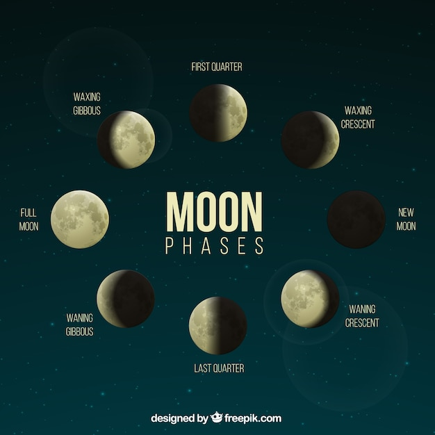 Realistic phases of the moon Free Vector
