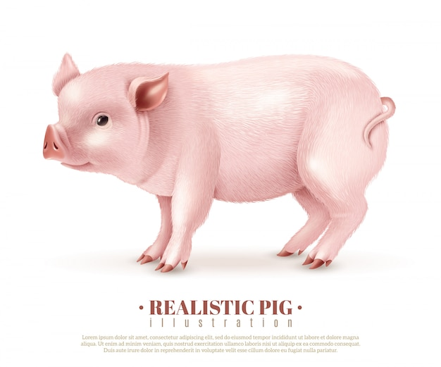 Realistic pig vector illustration Free Vector