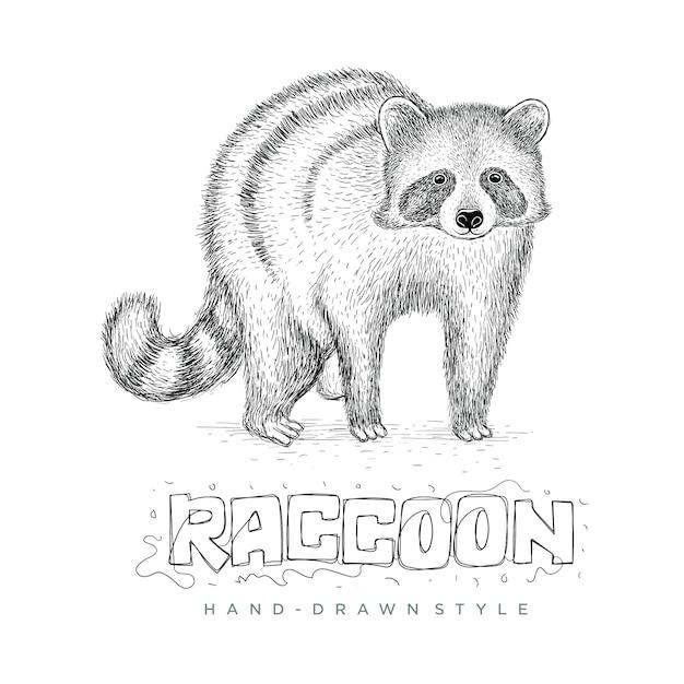 現実的なアライグマベクトル、手描きの動物イラスト Premiumベクター