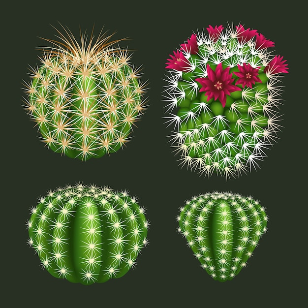 Realistic round cactus icon set vector isolated Premium Vector