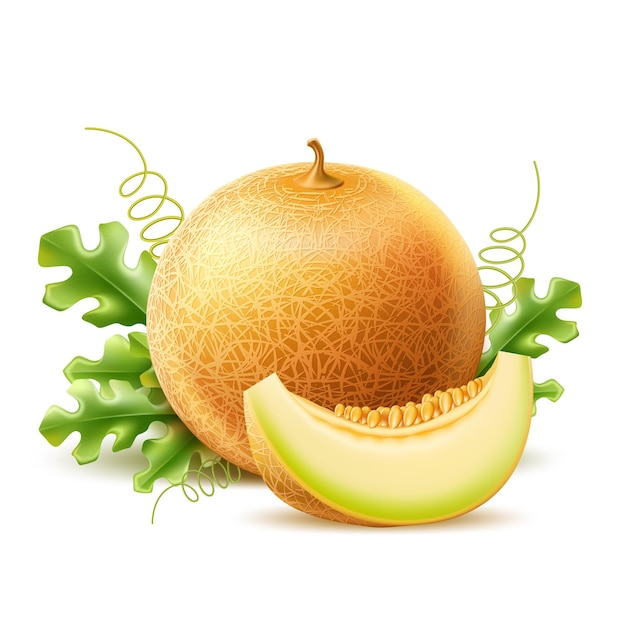 Realistic round melon with slice delicious sweet fruit vector ripe cantaloupe