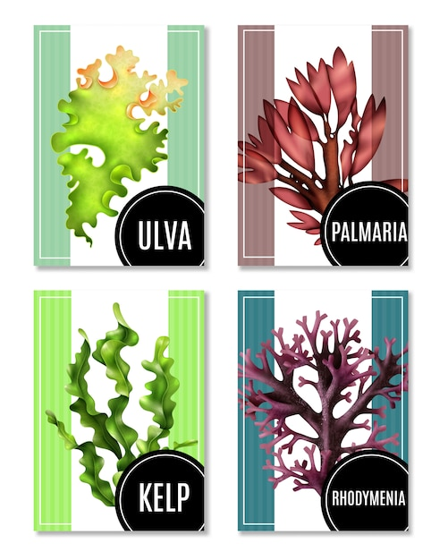 Realistic sea weeds illustrations set Free Vector