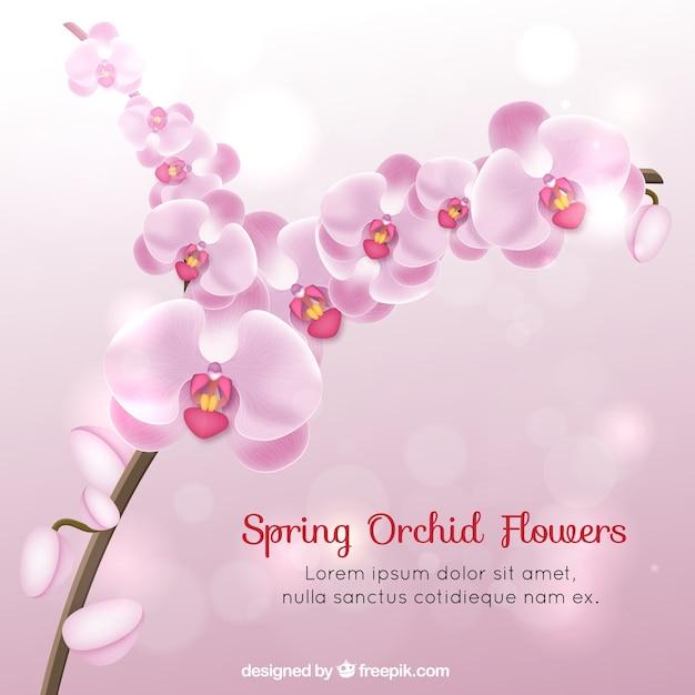 Orchid Flowers Jpg