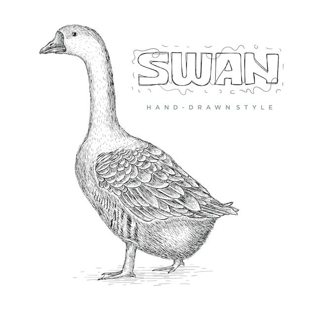 現実的な白鳥ベクトル、手描き動物イラスト Premiumベクター