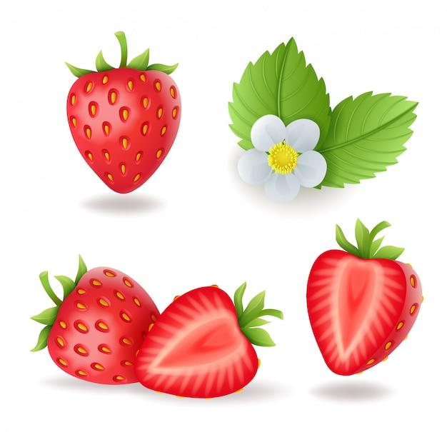 葉と花、新鮮な赤い果実、孤立した図入り現実的な甘いイチゴ。 Premiumベクター