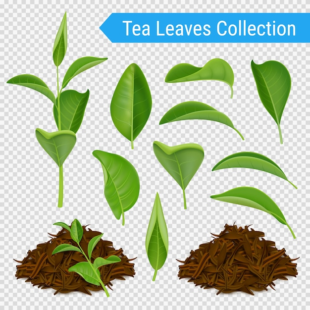 Realistic tea leaves transparent set Free Vector