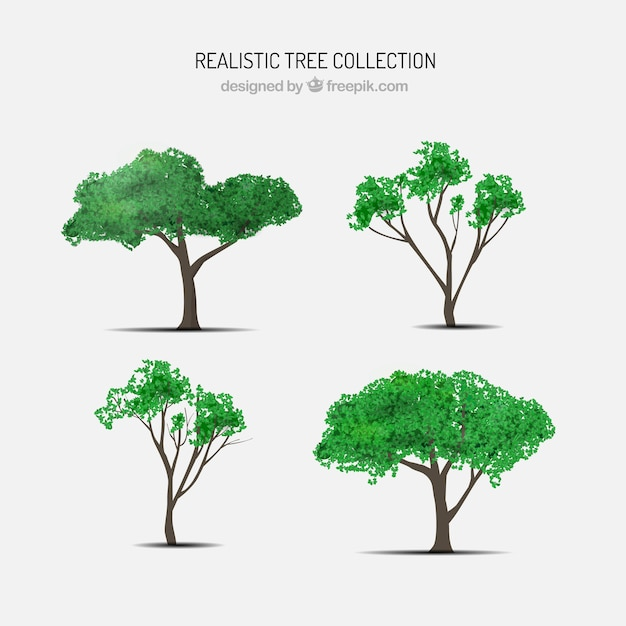 Realistic tree pack Free Vector