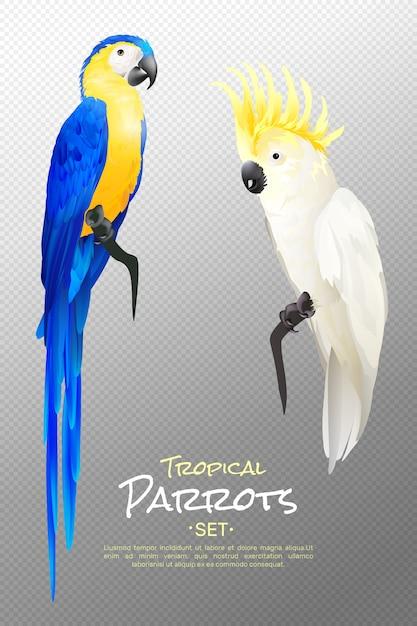 Realistic tropical parrots set Free Vector
