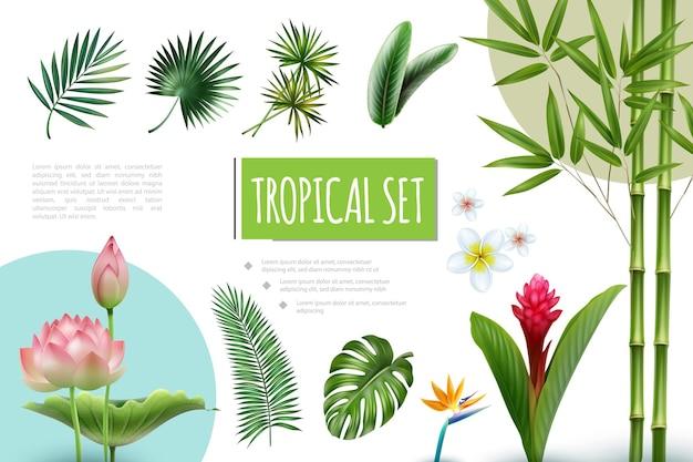 Реалистичная коллекция тропических растений с лотосом, красным имбирем, плюмерией, райской птицей, цветами, бамбуковыми стеблями, пальмовым монстером и листьями стрелиции Бесплатные векторы