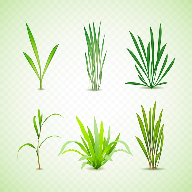 Realistic types of grass Free Vector