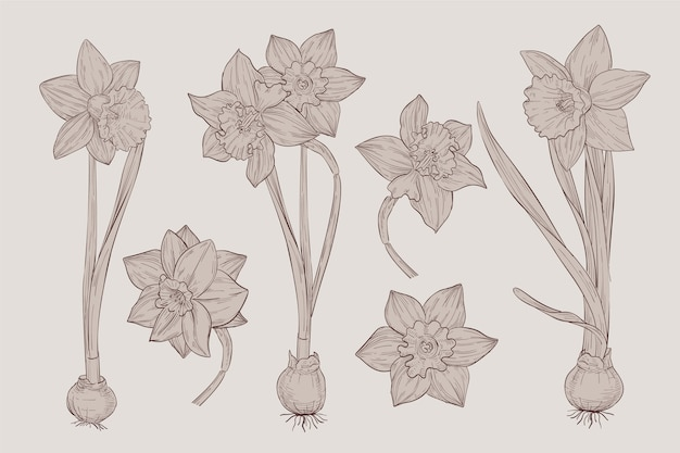 Realistic vintage draw of botany flower collection Free Vector