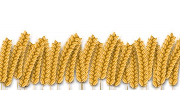 Реалистичная граница пшеницы для украшения шаблона и покрытия на белом фоне. концепция хлебобулочных изделий, органических продуктов питания и урожая. Premium векторы