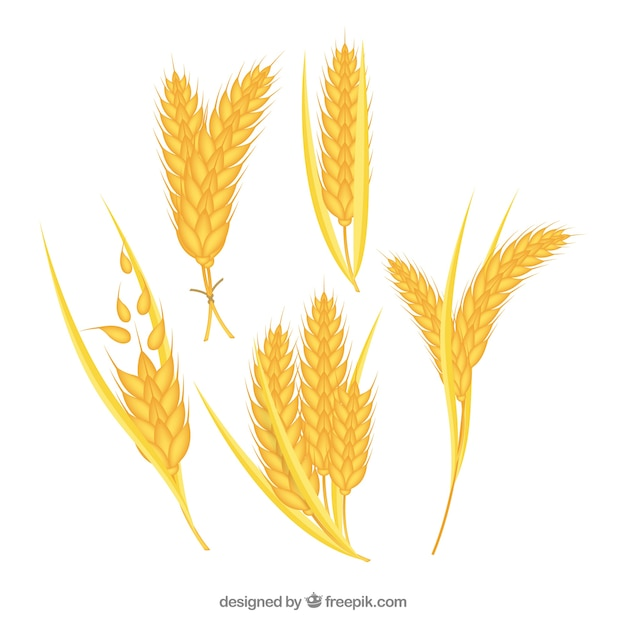 Realistic wheat collection Free Vector
